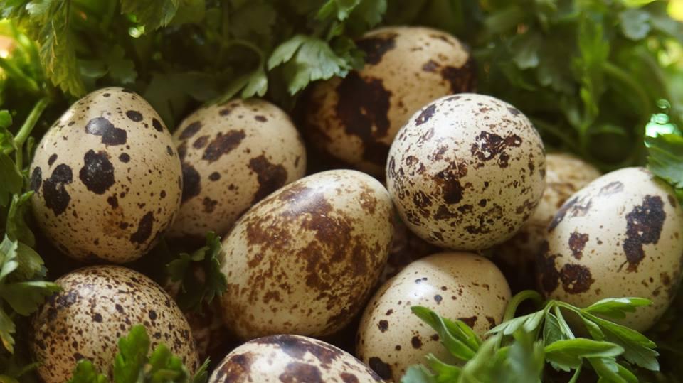 jajka naturalnie dla zdrowia